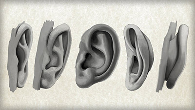 Digital Tutors – Methods for Drawing the Human Ear - طراحی دیجیتالی گوش انسان در فتوشاپ