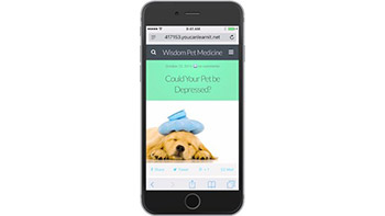 Lynda - WordPress Mobile Solutions