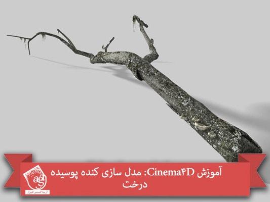 آموزش Cinema 4D : مدل سازی کنده پوسیده درخت