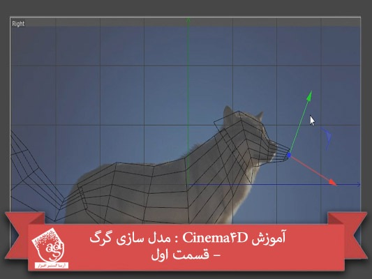 آموزش Cinema4D : مدل سازی گرگ – قسمت اول
